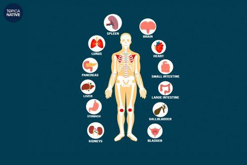 Từ vựng tiếng Anh về thân thể người rất đa dạng