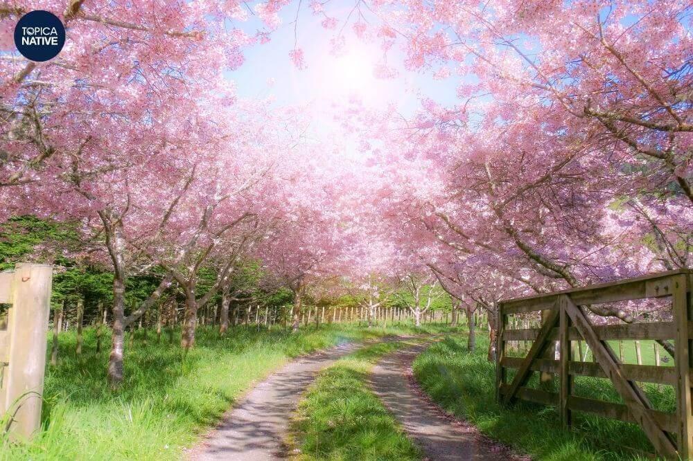 Mùa xuân là thời gian đẹp nhất năm vì vậy có rất nhiều cảnh đẹp để miêu tả